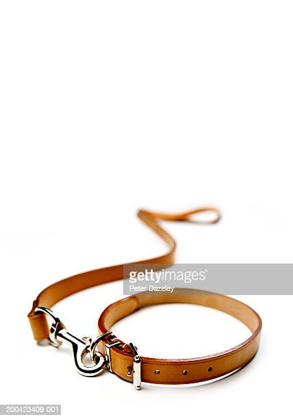Dog lead and collar