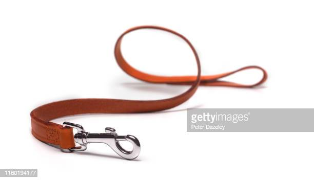dog lead on white, lost dog - pet lead stock pictures, royalty-free photos & images