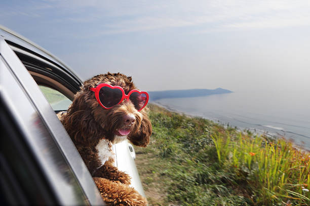 Dog Leaning Out Of Car Window On Coast Road Wall Art