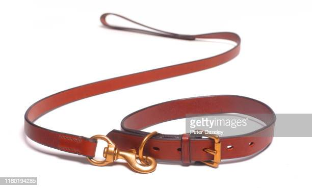dog leash and collar death of dog - pet lead stock pictures, royalty-free photos & images