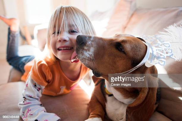 dog licking girl's cheek while lying on sofa at home - girls licking girls stock pictures, royalty-free photos & images