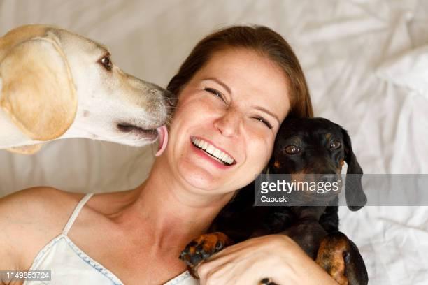cane leccare è proprietario mostrando amore - due animali foto e immagini stock