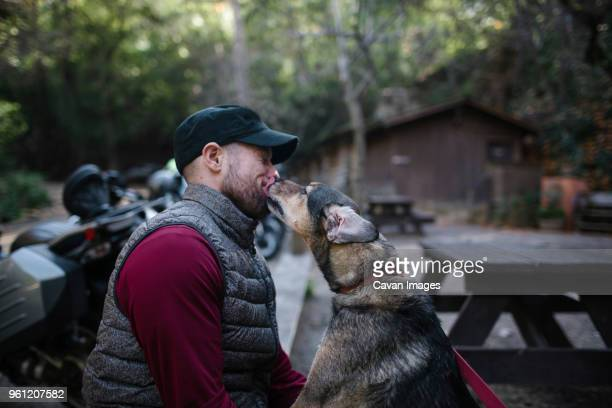 dog licking man face while sitting in forest - licking stock pictures, royalty-free photos & images