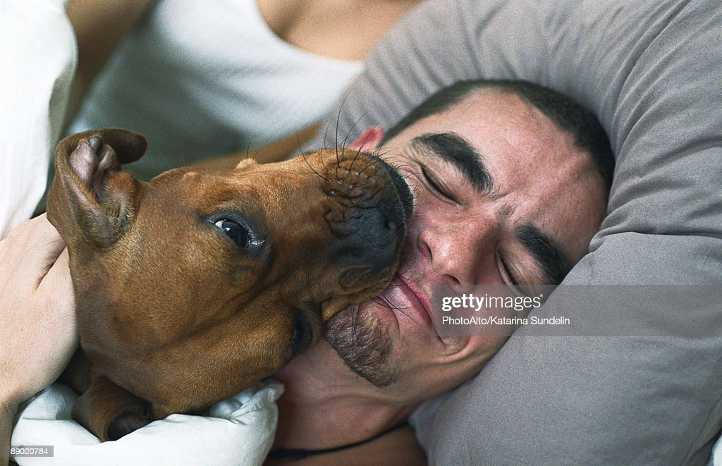Dog licking sleeping man's smiling face : Stock Photo