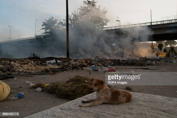A dog lies on an old mattress during a huge arson made by local criminal gangs related to camorra organization inside an informal Roma settlement in...
