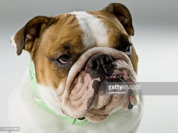 dog life - ugly dog stock pictures, royalty-free photos & images