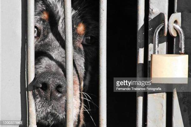 dog locked in a cage - dog pound stock pictures, royalty-free photos & images