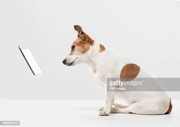 dog looking at floating cellphone - in der luft schwebend stock-fotos und bilder
