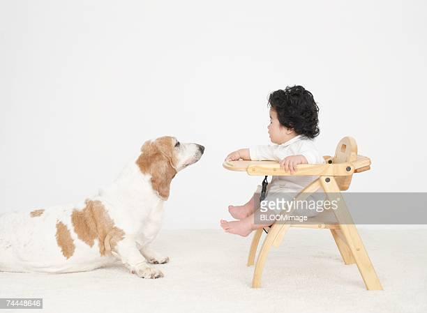 Dog looking at Japanese baby sitting chair