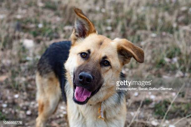 dog looking at the camera - stray animal stock pictures, royalty-free photos & images
