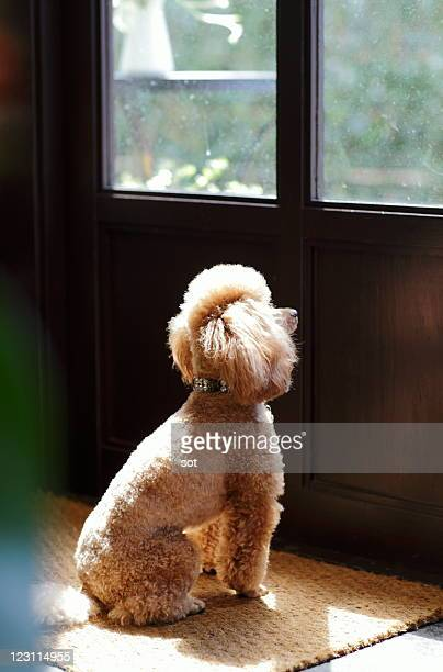A dog looking at the outside of the door