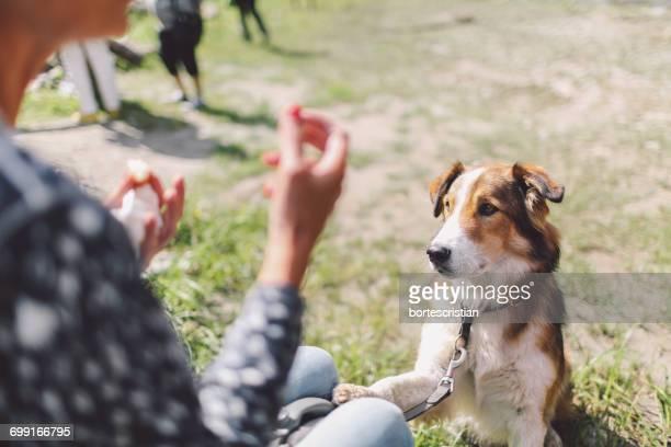 dog looking at woman on field - bortes cristian stock-fotos und bilder