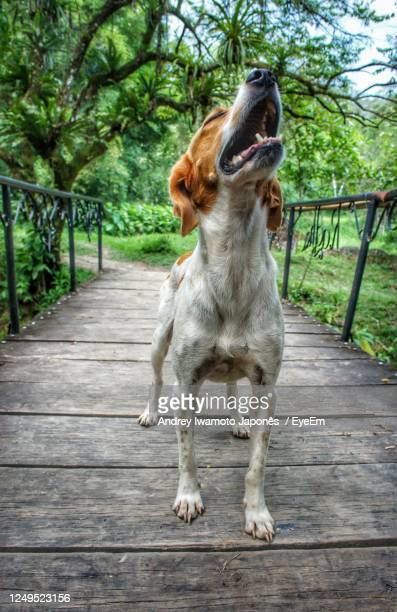 dog looking away on footpath - japonês stock pictures, royalty-free photos & images