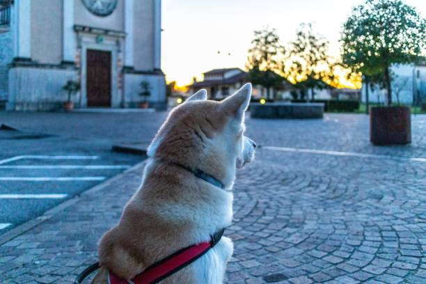 Dog Looking Away On Street In City