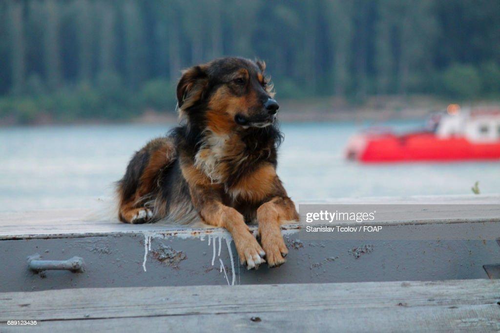 Dog looking away : Stock Photo