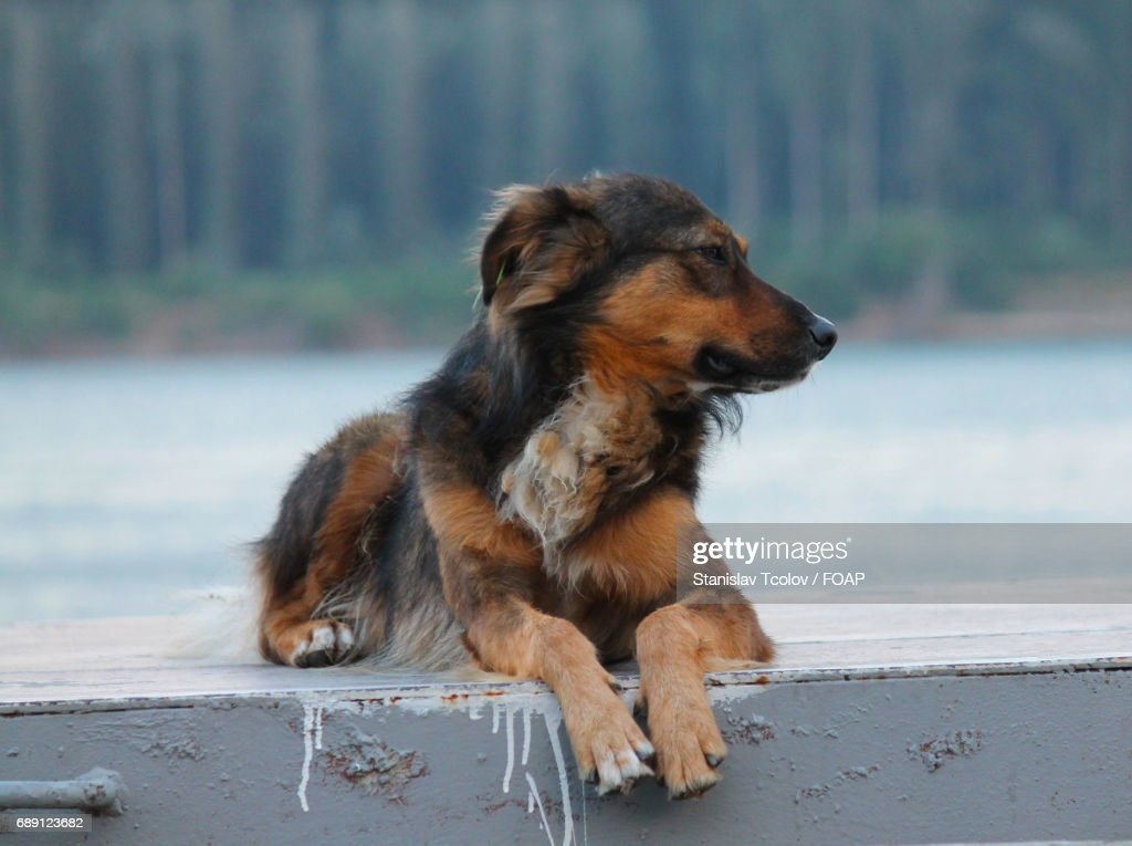 Dog looking away : Stock Photo