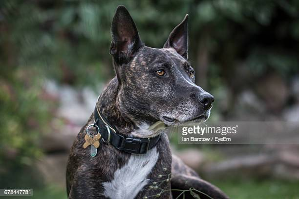 dog looking away while sitting on grassy field - barstow stock photos and pictures