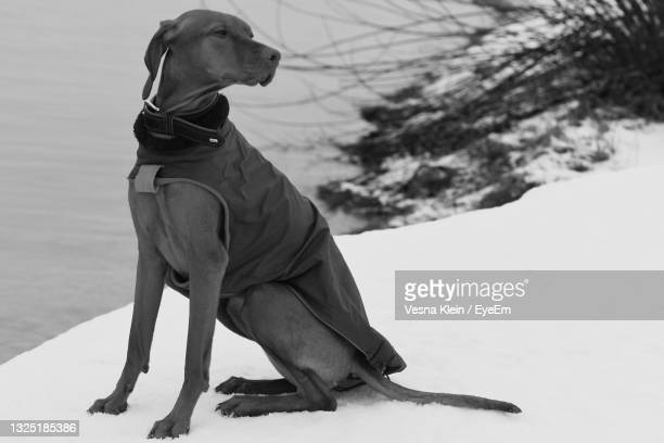 dog looking away while sitting on land - klein stock pictures, royalty-free photos & images