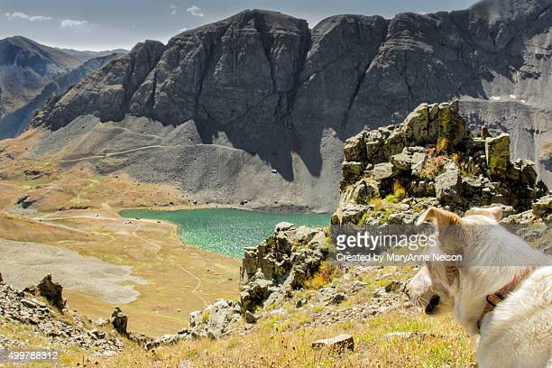 dog looking down in mountains at lake - mary lake stock photos and pictures