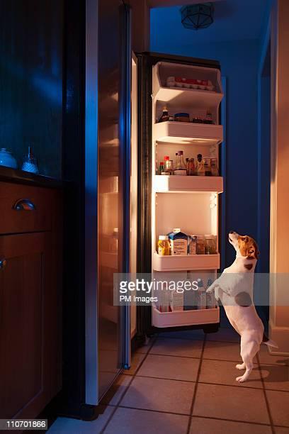 dog looking into refrigerator - frigo humour photos et images de collection