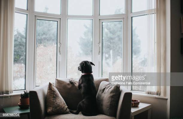 dog looking out of a window - waiting stock pictures, royalty-free photos & images