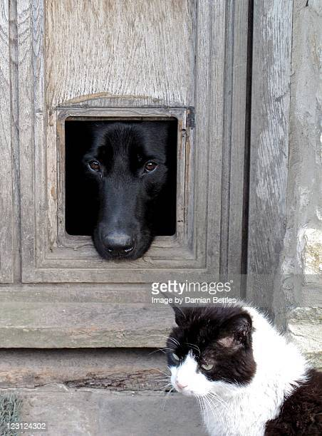 Dog looking out of cat flap