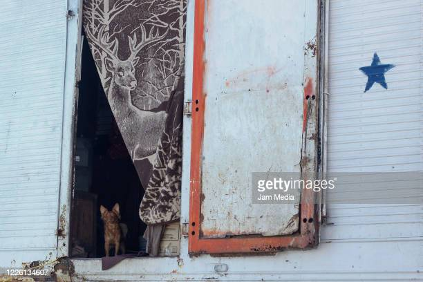A dog looking out of circus trailer on May 20 2020 in Queretaro Mexico As nonessential activities are not permitted during stage three of the...