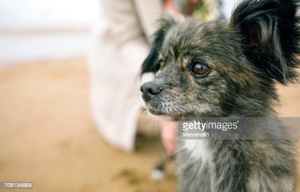 dog looking sideways on the beach - parte del corpo animale foto e immagini stock