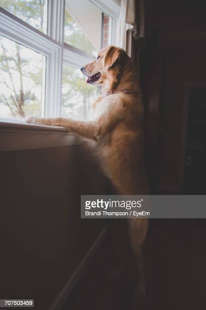 Dog Looking Through Window At Home