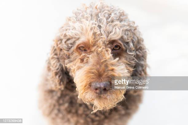 dog looking to the camera - benicassim stock pictures, royalty-free photos & images