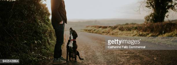 dog looking up at master - domestic animals stock pictures, royalty-free photos & images