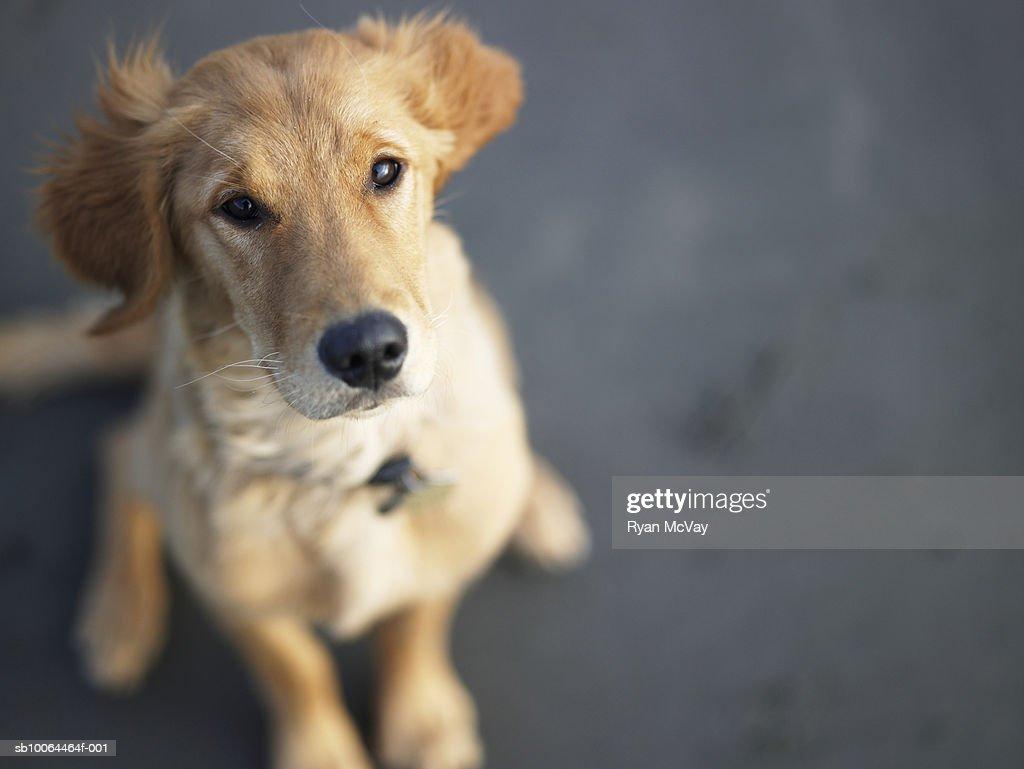 Dog looking up, close-up : Foto de stock