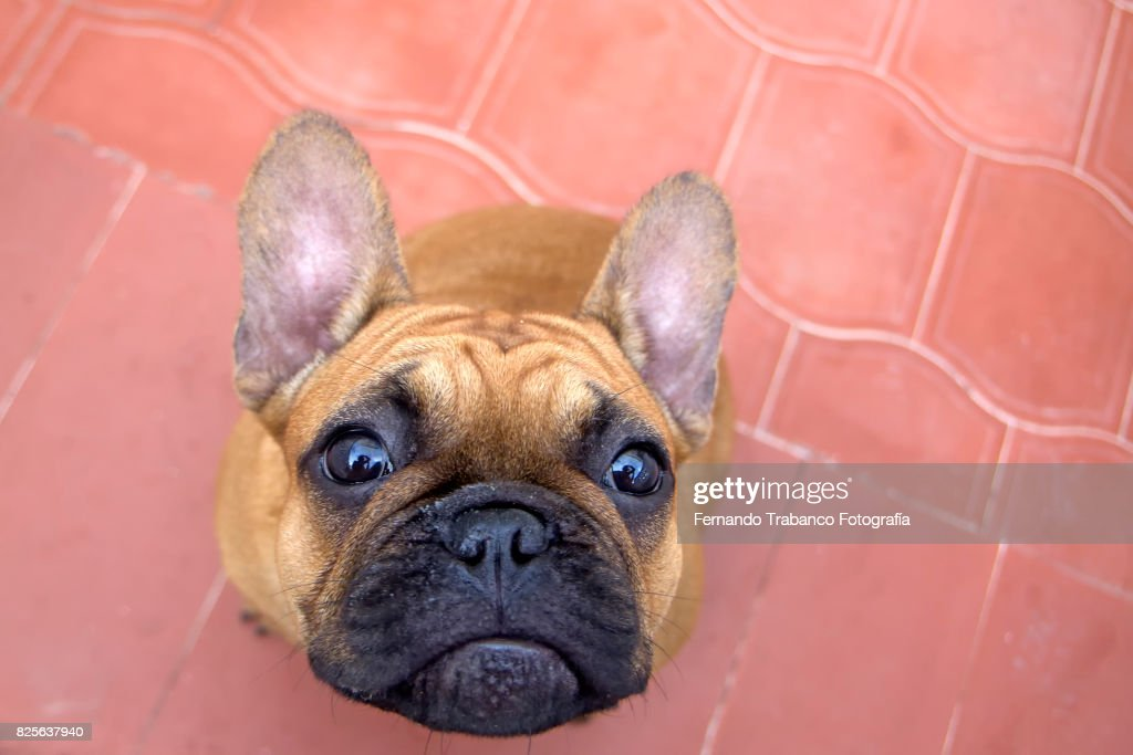 Dog looking up : Stock Photo