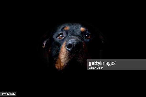 dog looking up - animal body part stock pictures, royalty-free photos & images