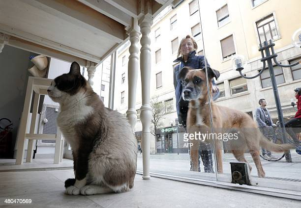 A dog looks at a cat sitting inside the Miagola Cafe in Turin on March 22 2014 The newly opened Miagola Cafe is a concept bar where cats and human...