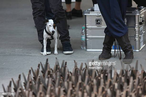 A dog looks at a work by Ai Weiwei entitled 'Magician Space' at the Art Berlin Contemporary fair on September 17 2015 in Berlin Germany The fair...