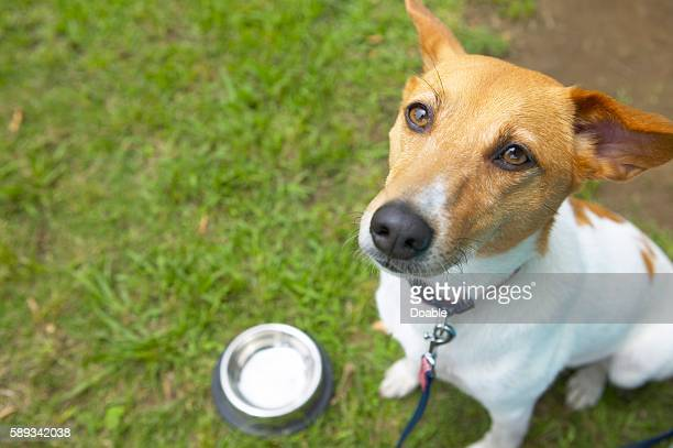A dog looks hungry next to its empty food bowl