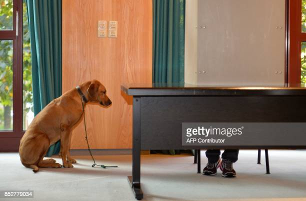 A dog looks on as its master casts his ballot at a polling station in Wuerselen near Aachen western Germany during general elections on September 24...