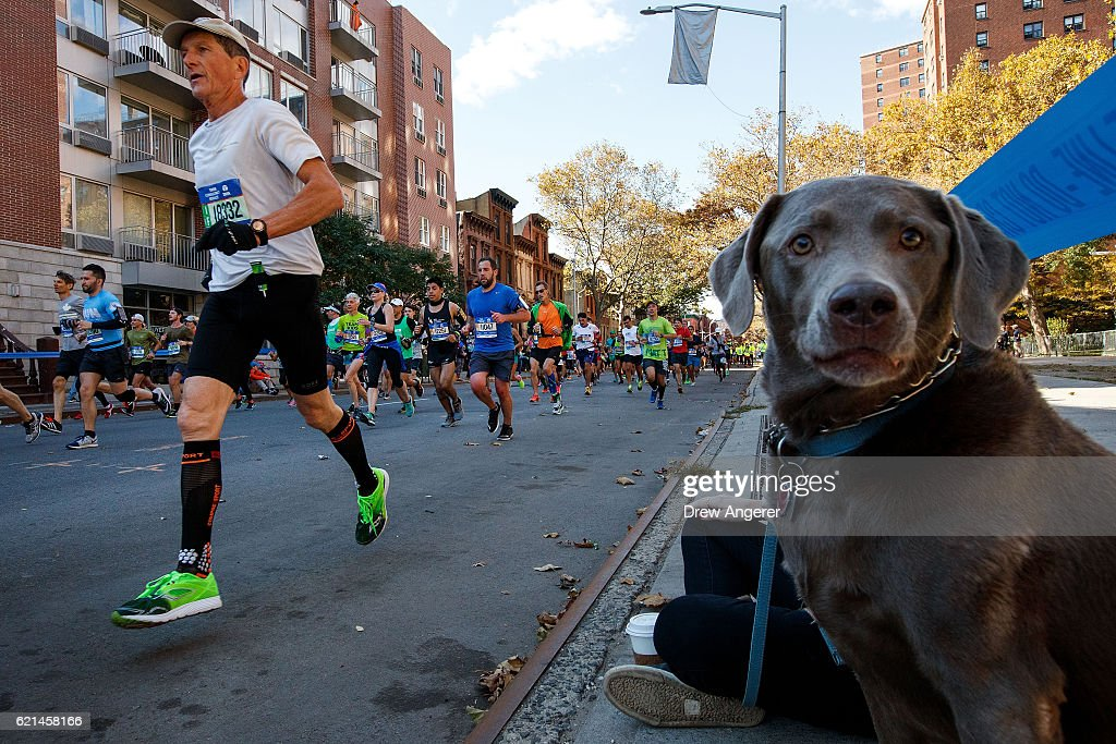 A dog looks on as runners make their way east on Lafayette Avenue during the 2016 TCS New York City Marathon, November 6, 2016 in the Clinton Hill neighborhood in the Brooklyn borough of New York City. Established in 1970, the annual race winds through all of New York City's five boroughs.