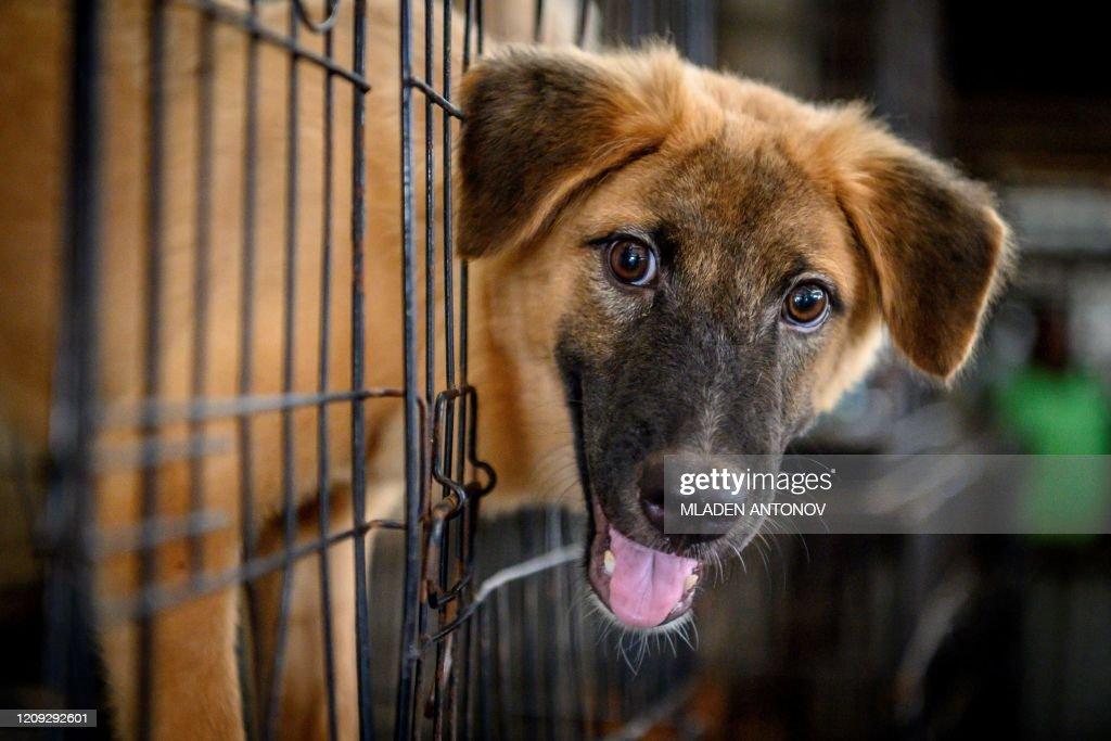 THAILAND-HEALTH-VIRUS-ANIMAL-DOGS : News Photo
