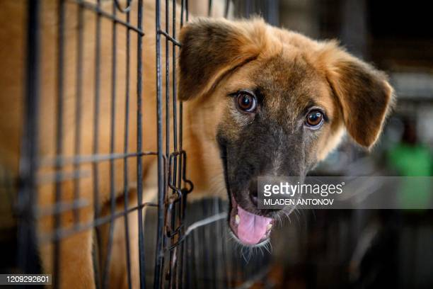 A dog looks out from a cage at Auntie Ju's shelter for stray dogs on the outskirts of Bangkok on April 6 where some 1500 canines rescued from the...