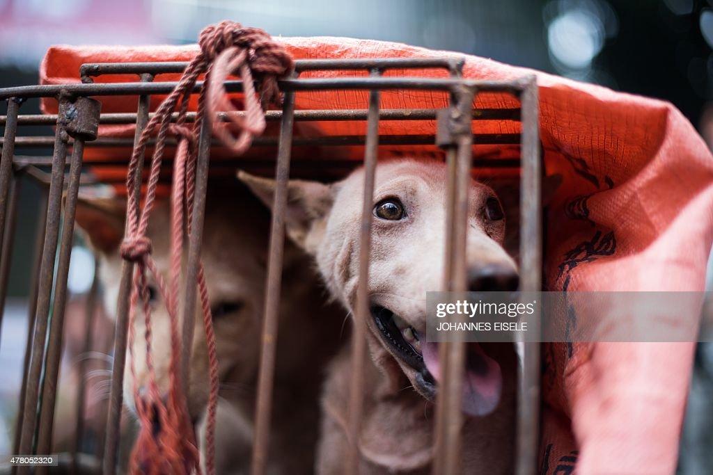 CHINA-ANIMAL-DOG : News Photo