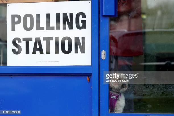 TOPSHOT A dog looks out of the door of a laundrette set up as a polling station in Oxford west of London as Britain holds a general election on...