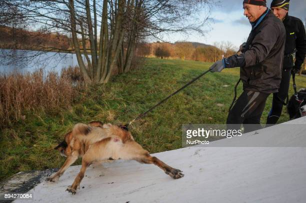 A dog looses its grip and slides down an icy kiteboarding ramp in Bydgoszcz Poland on December 17 2017 A local group called HDR Wataha organizes...