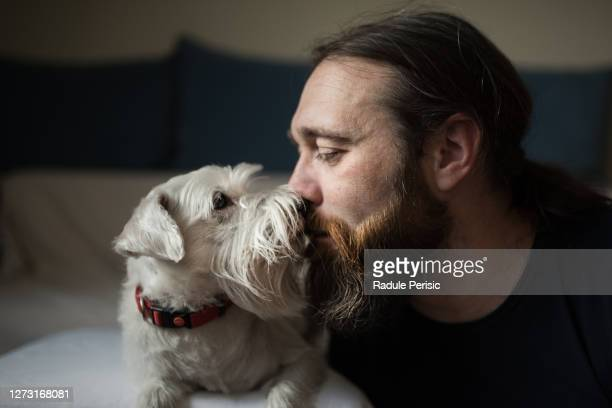 dog lover - schnauzer stock pictures, royalty-free photos & images