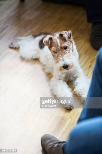 Dog lying by businessman at creative office