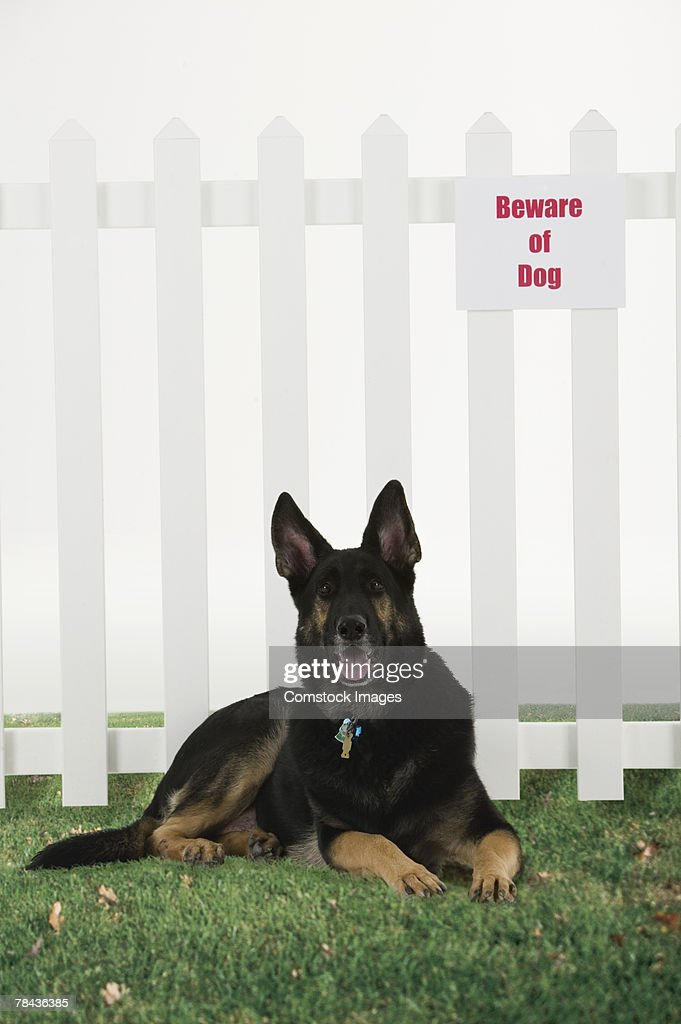 Dog lying down by fence with beware of dog sign : Stockfoto