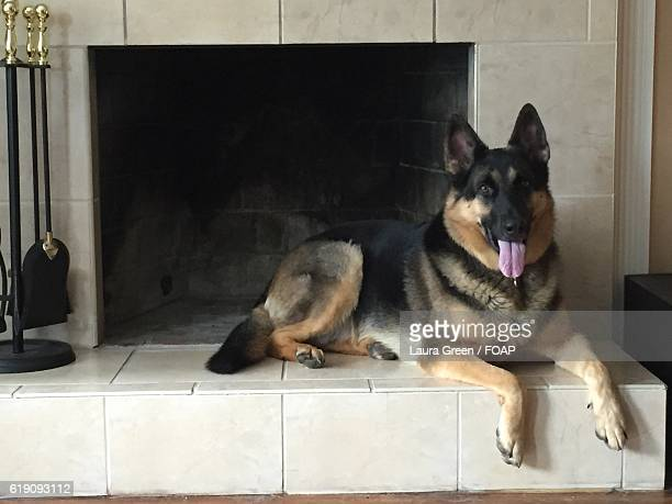 dog lying down near fireplace - lying down stock-fotos und bilder
