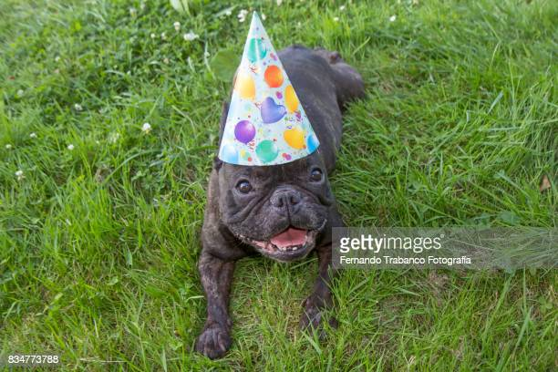 Dog lying in the grass with party hat