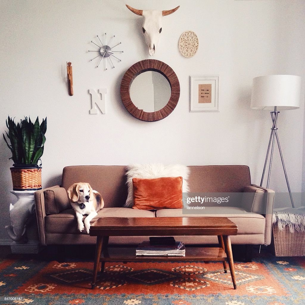 Dog lying on sofa : Stock Photo